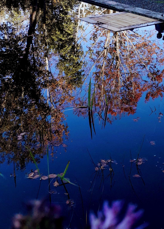 Sulzberg, Moor, beautiful spots in vorarlberg, wandern mit kindern in vorarlberg, familienwandern, familienunternehmungen