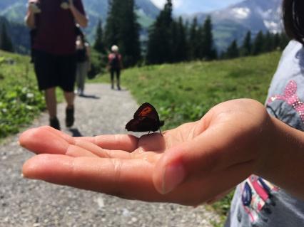 schmetterlinge auf hand, zahme schmetterlinge, schmetterlinge in vorarlberg, butterflies